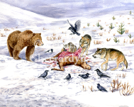 Bear and Wolves, published in World of Animals 2015 issue 16