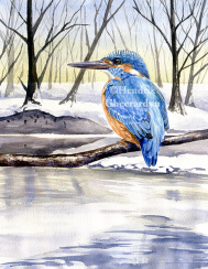Common Kingfisher, published in Buitenleven magazine (SOLD)