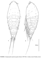 body of copepod (Gheerardyn et al 2008)