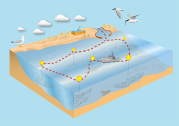 Vector illustration - shipping route